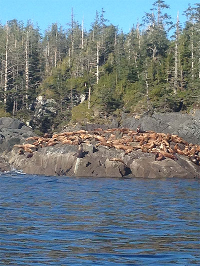 Alaskan Cruise Excursions