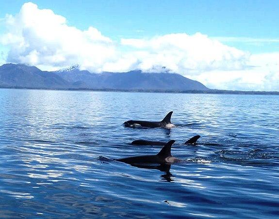 Shore Excursion in Ketchikan Alaska