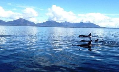 Whale Watching And Wildlife Charters Ketchikan, Alaska