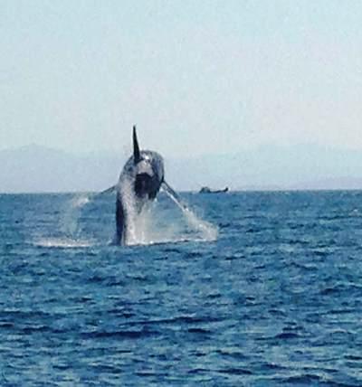 Ketchikan, AK Whale Watching as You Fish