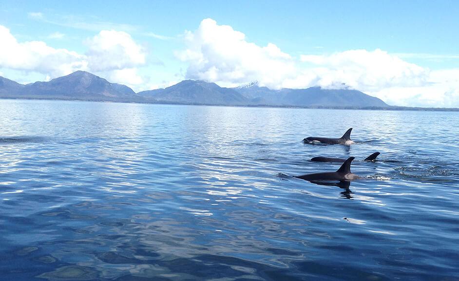 Whale Watching Trips Ketchikan Alaska