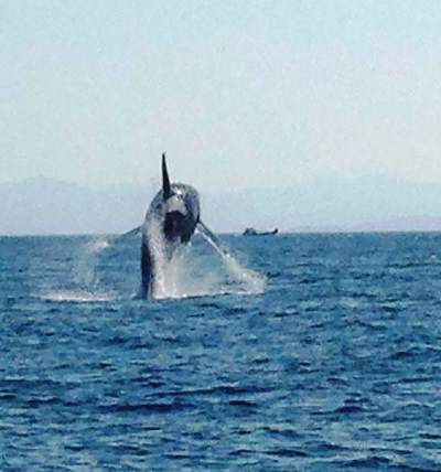 Whale Watching While You Fish